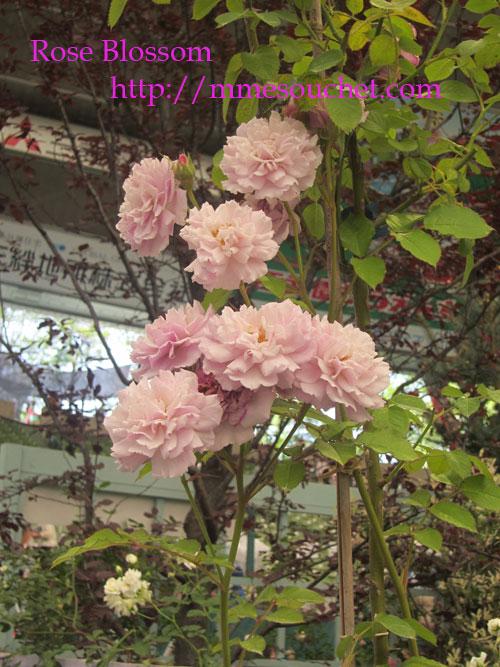 houseten20120519.jpg