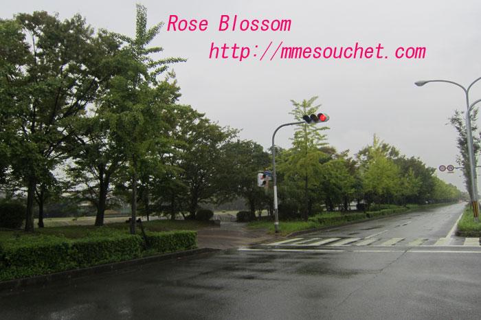 kouyou20111005.jpg