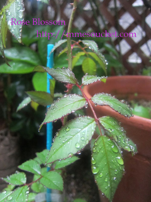 leafkeiko20120423.jpg