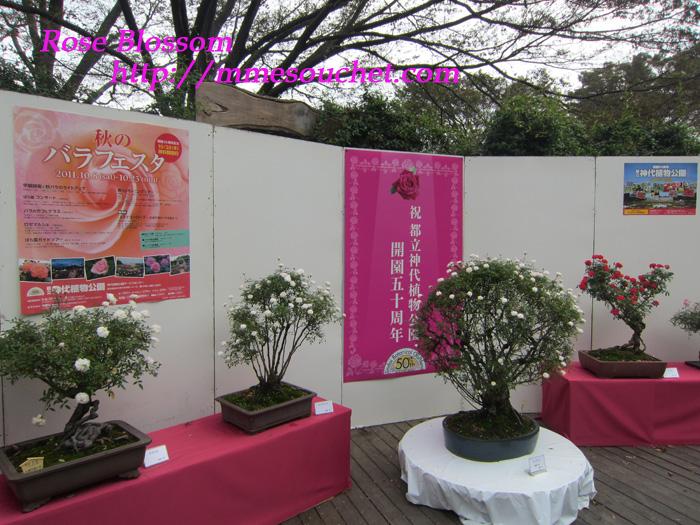 minibara20111020.jpg