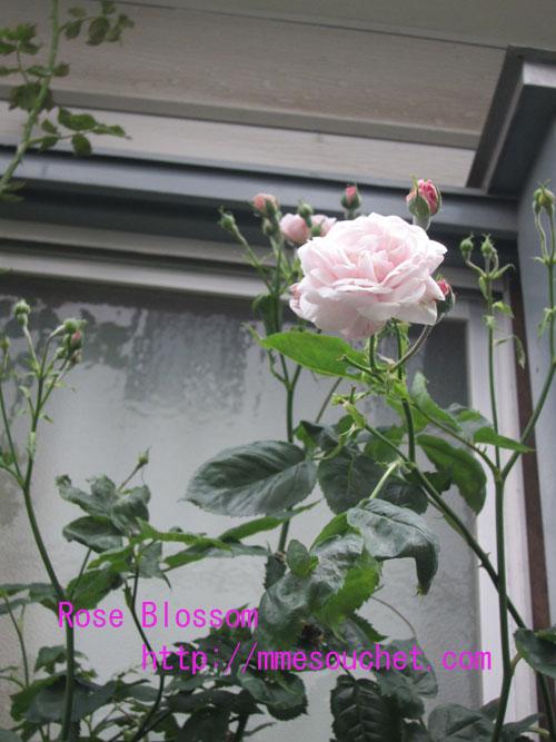 mmesouchet20120513all.jpg