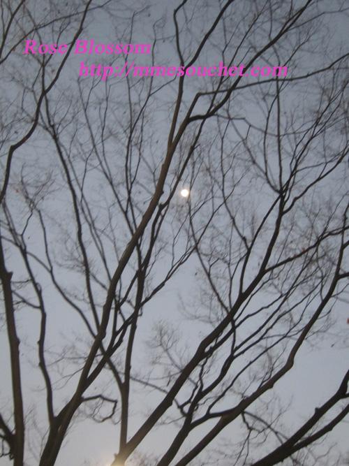 moon201202032.jpg