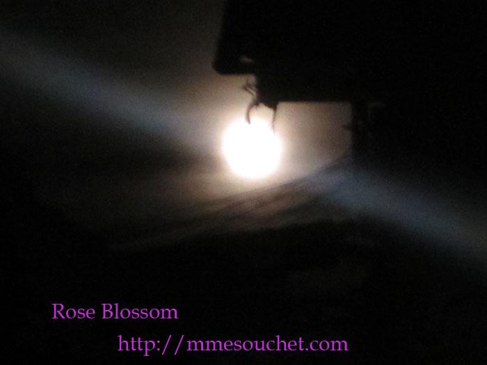 moon201205061.jpg