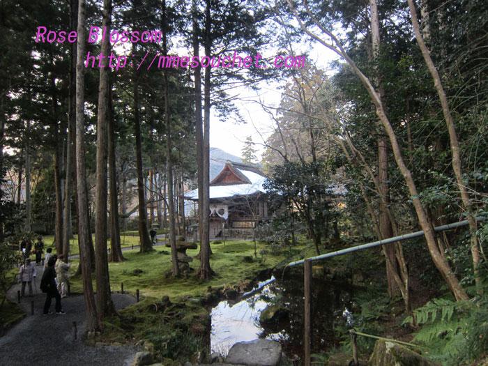niwa20120102.jpg