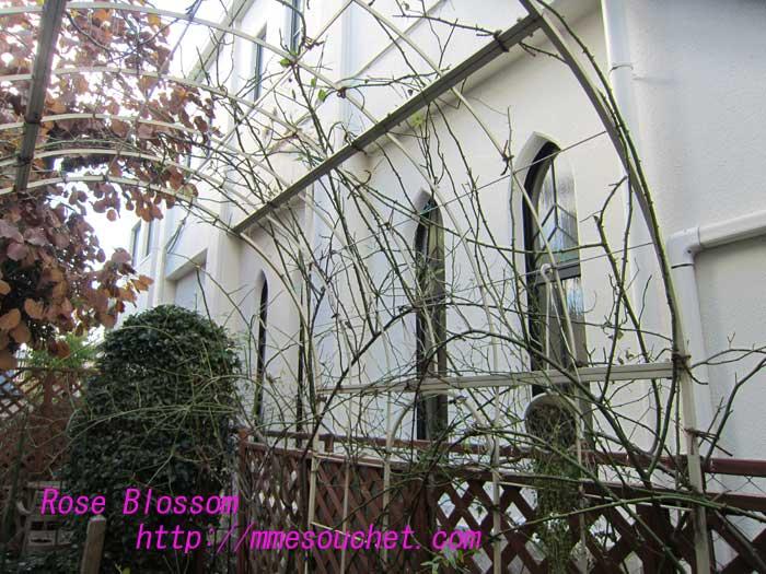 niwa201212083.jpg