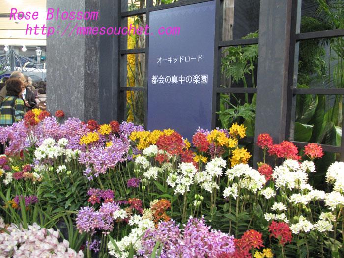 orkidroad20130219.jpg