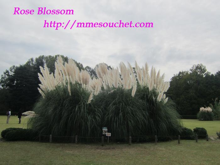 panpasgrass20111020.jpg