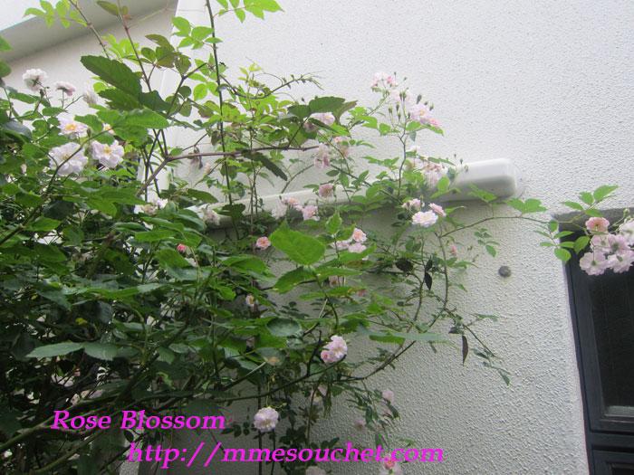pauls20120522.jpg