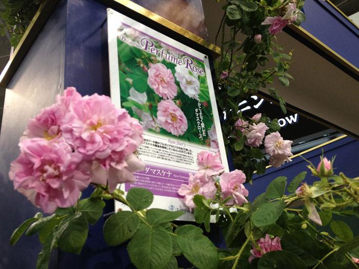 rosa20120513board.jpg