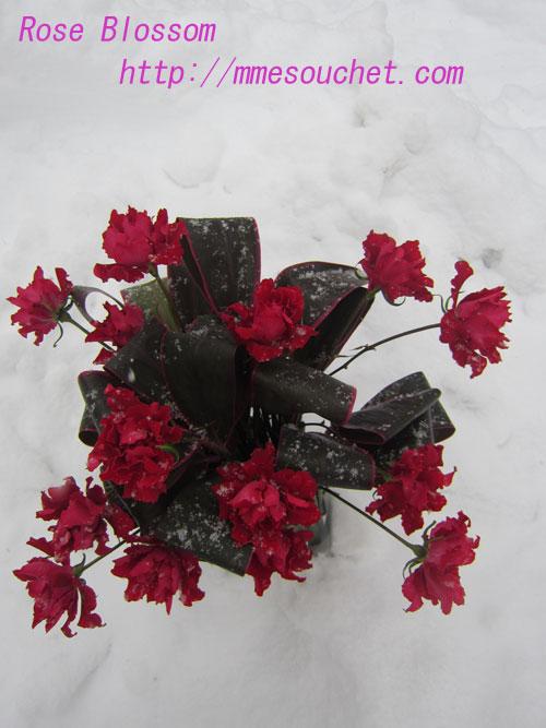rose201302061.jpg