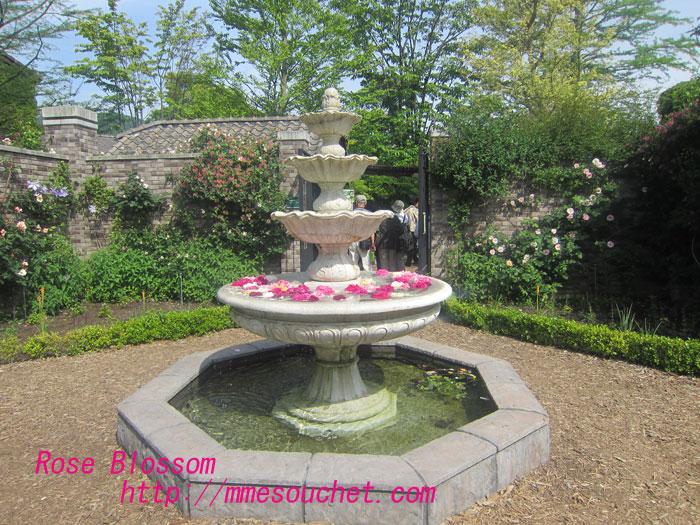 rosebass20120627.jpg