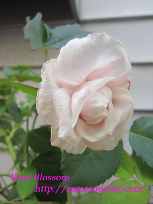 rujyumon20111104.jpg