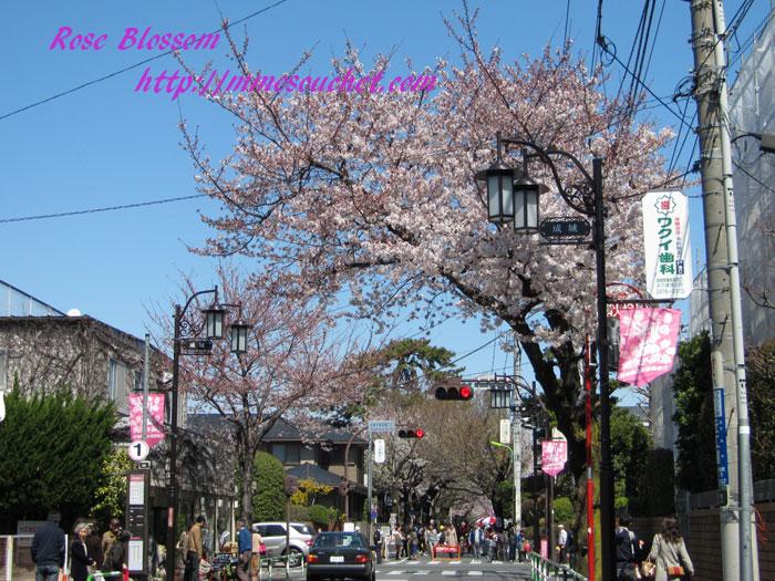 sakura20120407.jpg