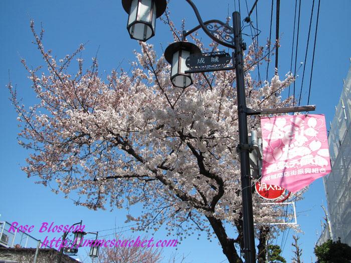sakura201204072.jpg