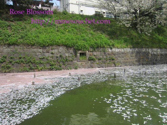 sakuraumiall20120413.jpg