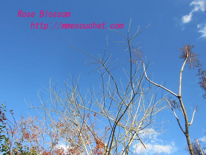 sky20111112.jpg