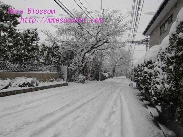 snow20130111.jpg