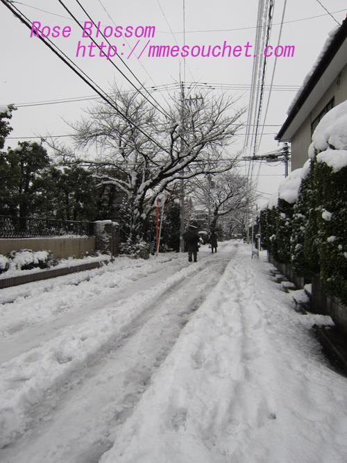 snow20130113.jpg