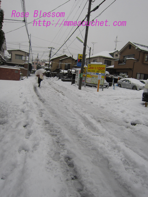snow20130114.jpg