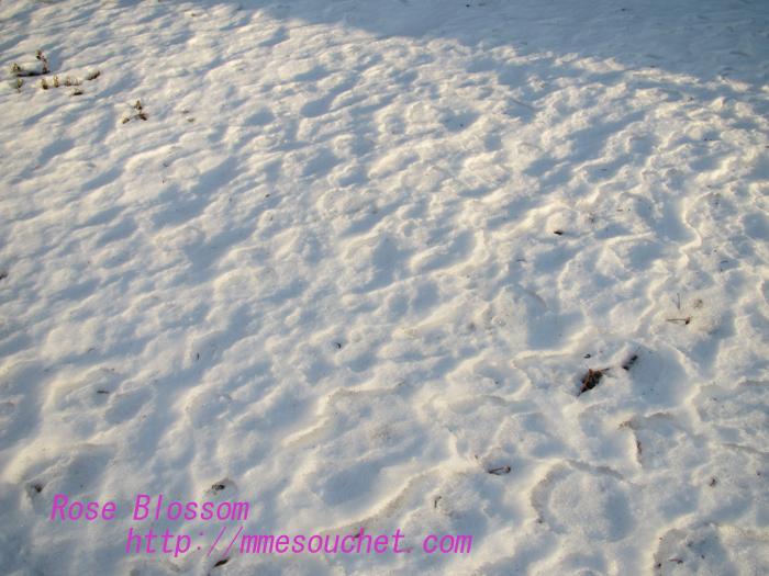 snowgarden20130109.jpg