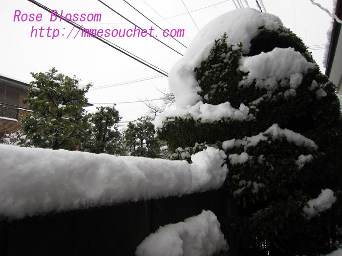 snowgenkan20130111.jpg