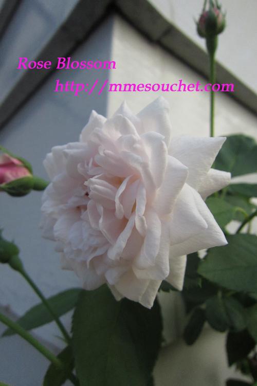 souchet20110918.jpg