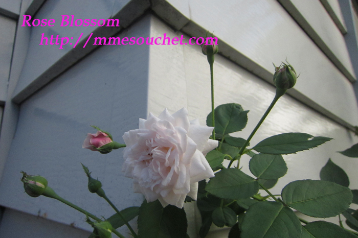 souchet201109181.jpg