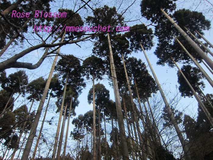 sugi20120102.jpg