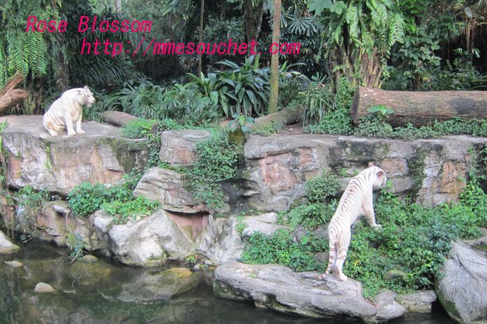 tiger201109282.jpg