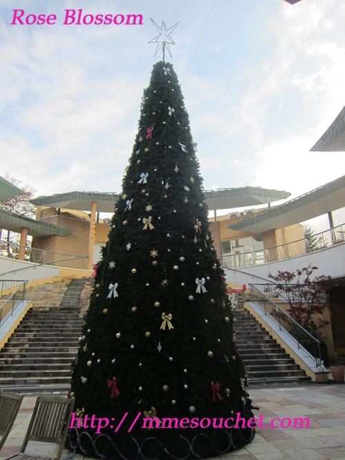 tree20111112.jpg