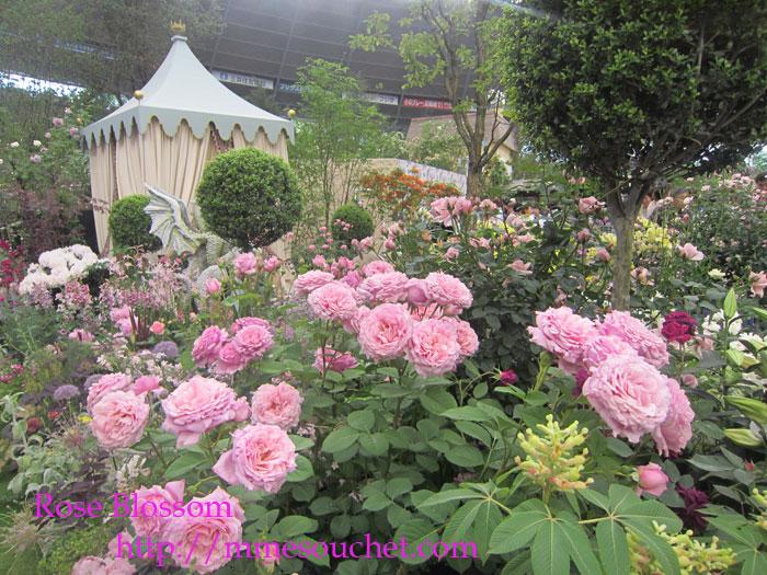 yosiya20120520.jpg