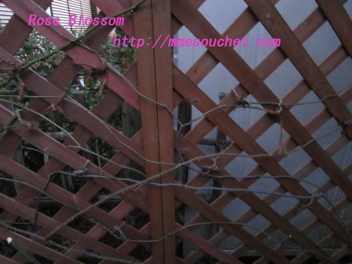 yuin20120130.jpg