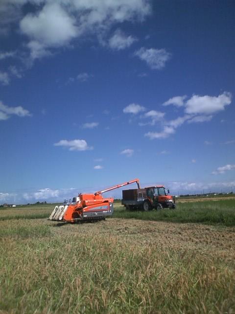 2011 稲刈り