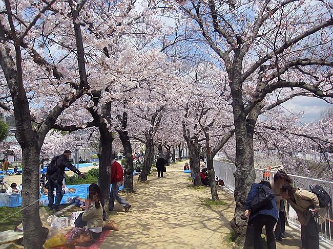 妙法寺川でランチお花見。(^u^)