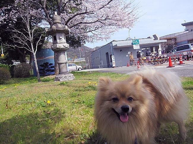 愛犬まーると行く赤穂の旅(^^♪