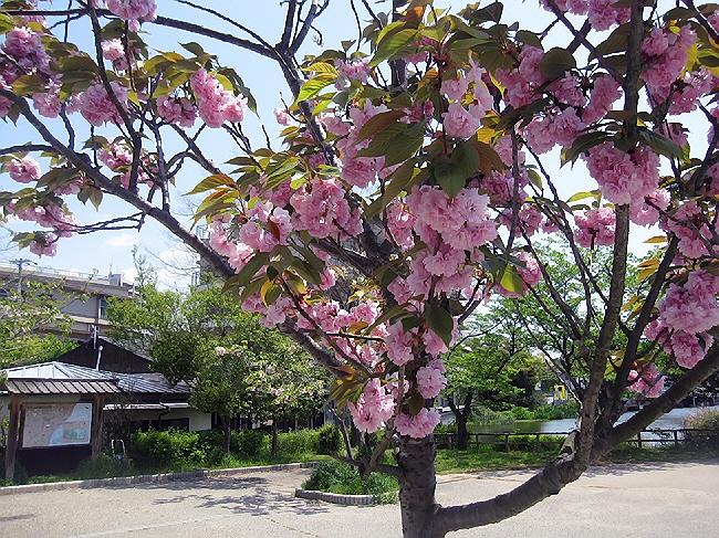 アースディ神戸と須磨寺公園☆
