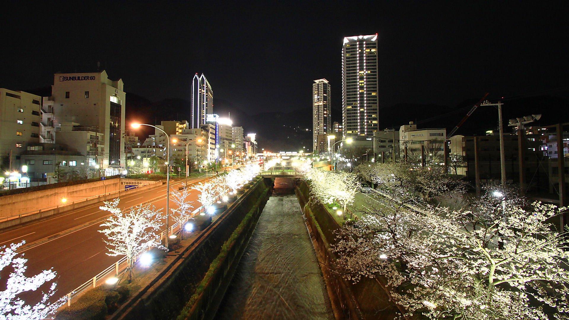生田川公園の夜桜・生田川の桜並木のライトアップ