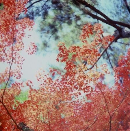 TOY-604_Yashica.jpg