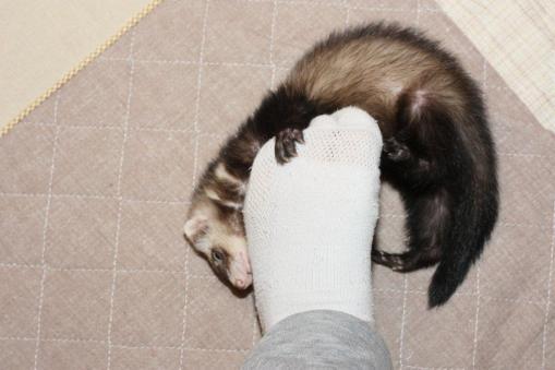 足を噛んで遊ぶミッキー2
