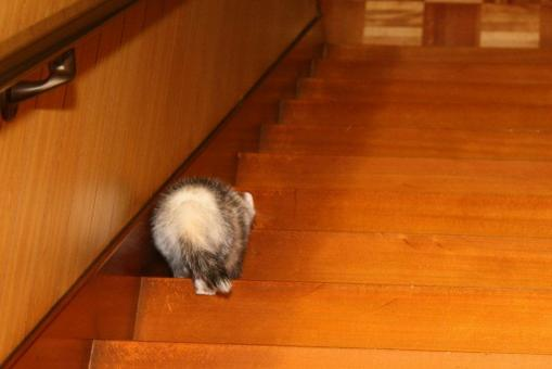 階段を下りるマルコ