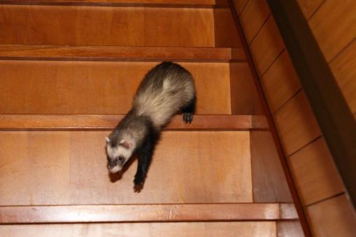 1月9日生後4ヶ月13日で階段を下りれる様に。