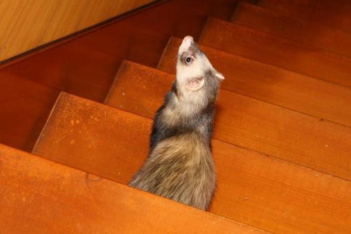 階段を降りながら考えるミッキー君