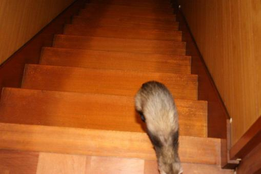 階段を上ってきたミッキー