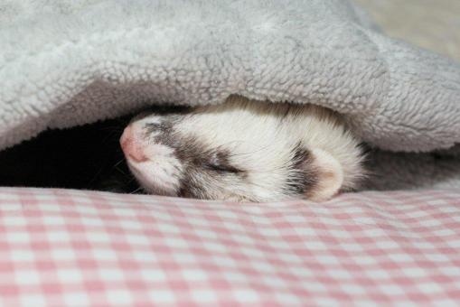 枕でねんねのミッキー君