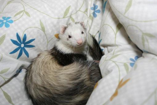 布団で眠るマルコ1