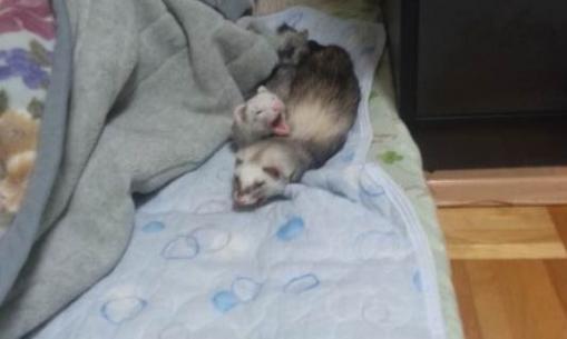 仲良く寝んね。