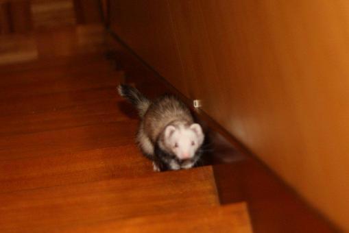 階段を上るマルコ