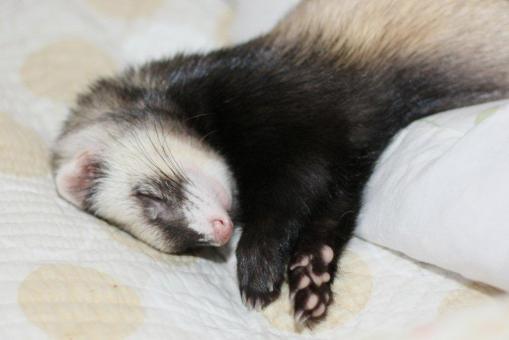 枕の横で寝んねのミッキー君4