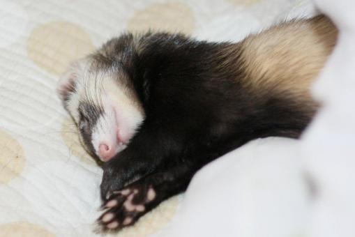 枕の横で寝んねのミッキー君3