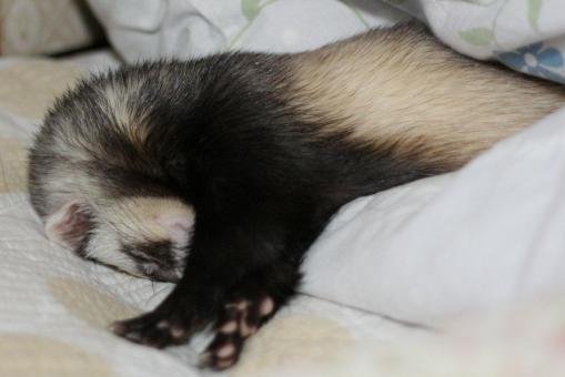 枕の横で寝んねのミッキー君2